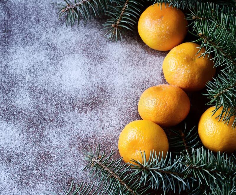 Mandarini e rami degli aghi del pino sui precedenti di inverno immagine stock