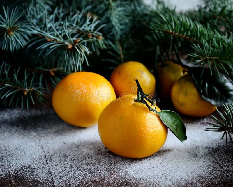 Mandarini e rami degli aghi del pino sui precedenti di inverno fotografia stock libera da diritti