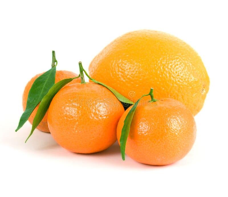 Mandarini ed arancio fotografia stock libera da diritti