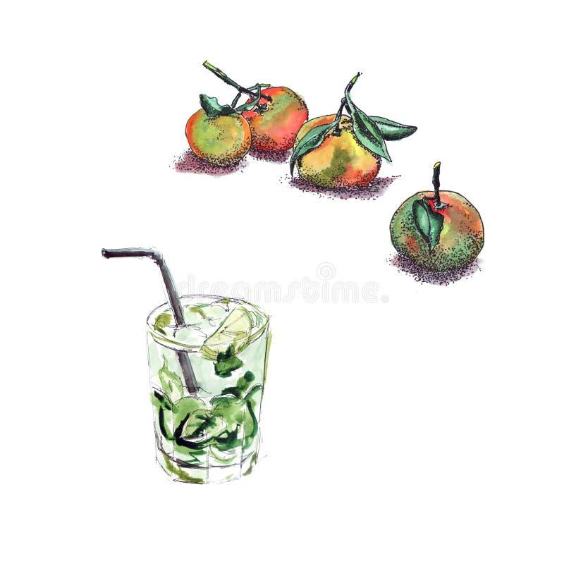Mandarini luminosi e succosi con gli acquerelli e un mojito di raffreddamento succoso fresco e del pointe del cocktail con l'acqu illustrazione di stock
