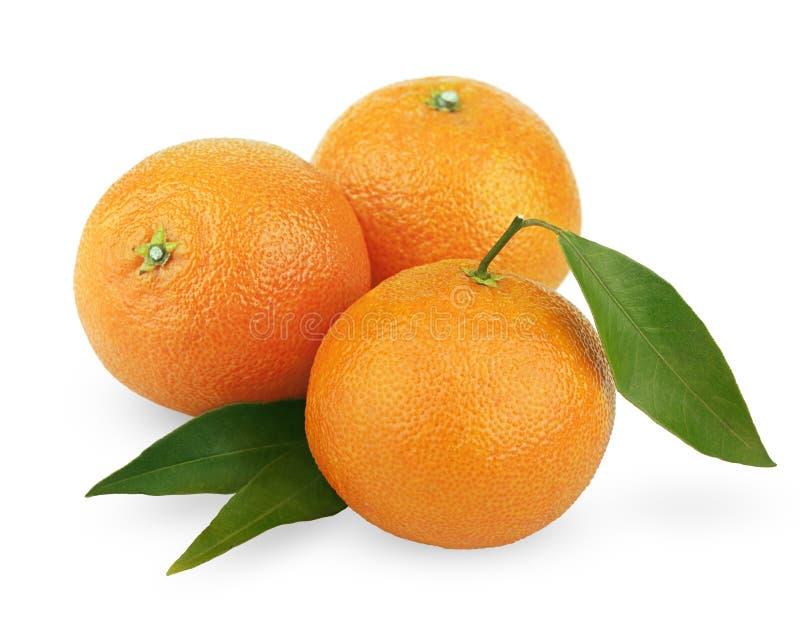 Mandarini maturi con i fogli immagine stock libera da diritti