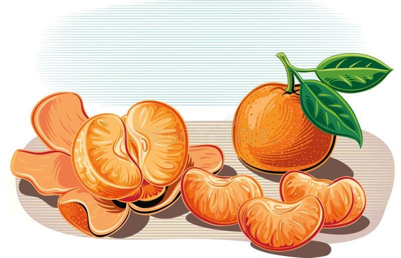 Mandarini, pendenti contro una tabella una sbucciata illustrazione di stock