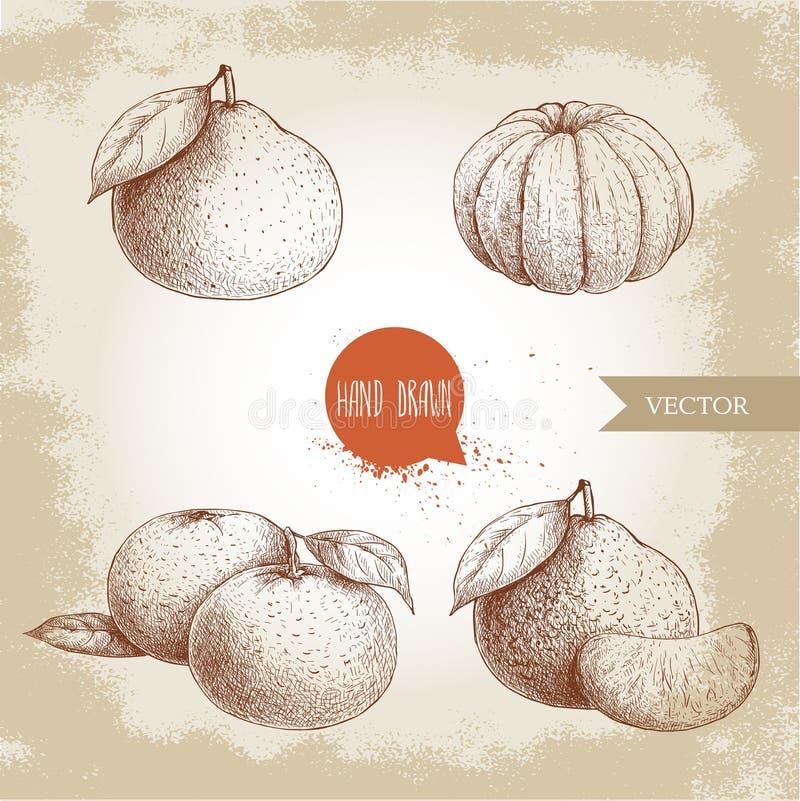 Mandarini rassodati del od di schizzo fatto a mano interi e sbucciati Illustrazione d'annata di stile del mandarino con le foglie royalty illustrazione gratis