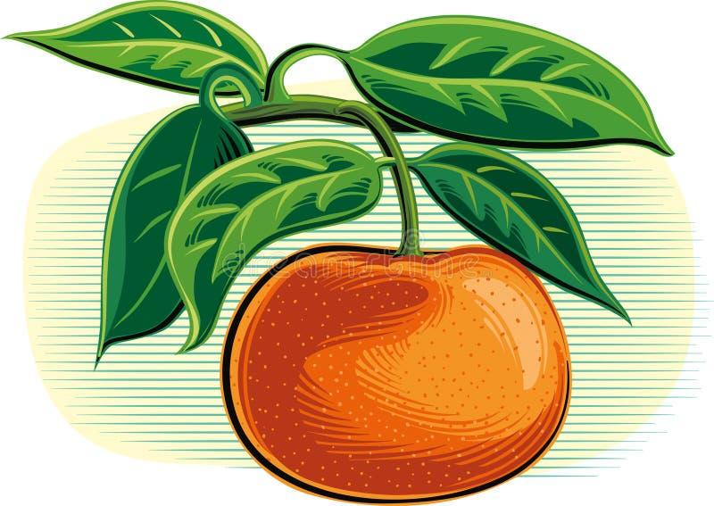 Mandarini su una priorità bassa bianca royalty illustrazione gratis