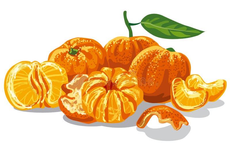 Mandarini succosi freschi royalty illustrazione gratis