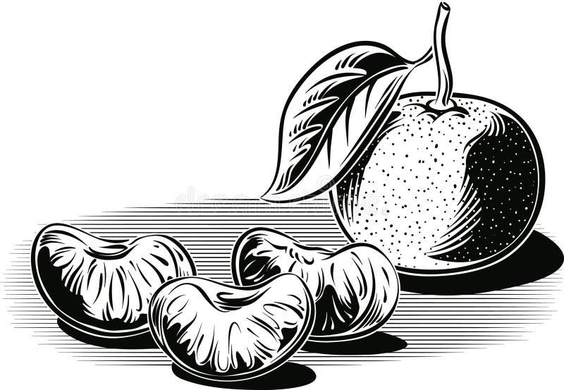 Mandarini, uno sbucciati ed alcuni amori illustrazione vettoriale