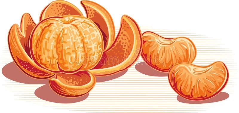 Mandarini, uno sbucciati ed alcuni amori illustrazione di stock