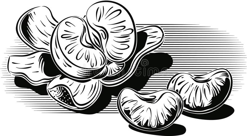 Mandarini, uno sbucciati ed alcuni chiodi di garofano illustrazione di stock