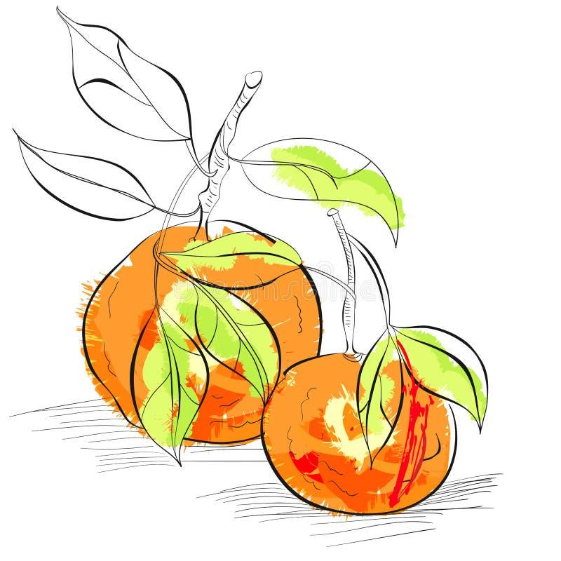 Mandarino illustrazione vettoriale