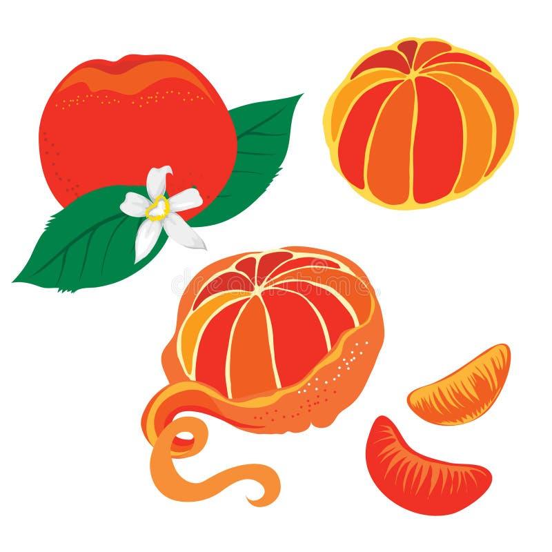 Mandarino illustrazione di stock