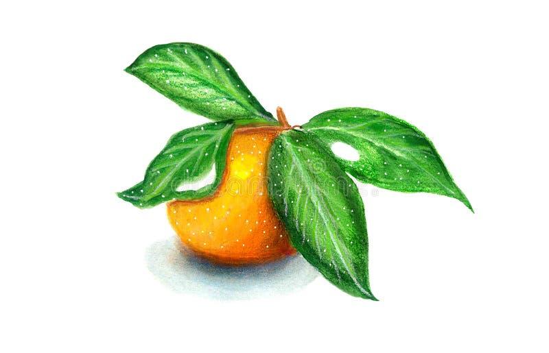 Mandarino con gli acquerelli e i pensils delle foglie fotografie stock