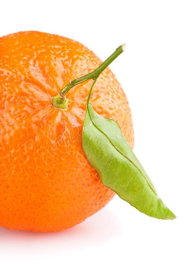 Mandarino con il foglio fotografia stock libera da diritti