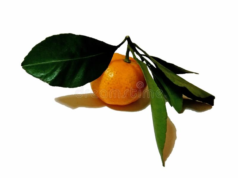 Mandarino con la foglia verde isolata su fondo bianco fotografia stock libera da diritti