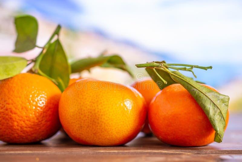 Mandarino con una foglia in Italia fotografia stock