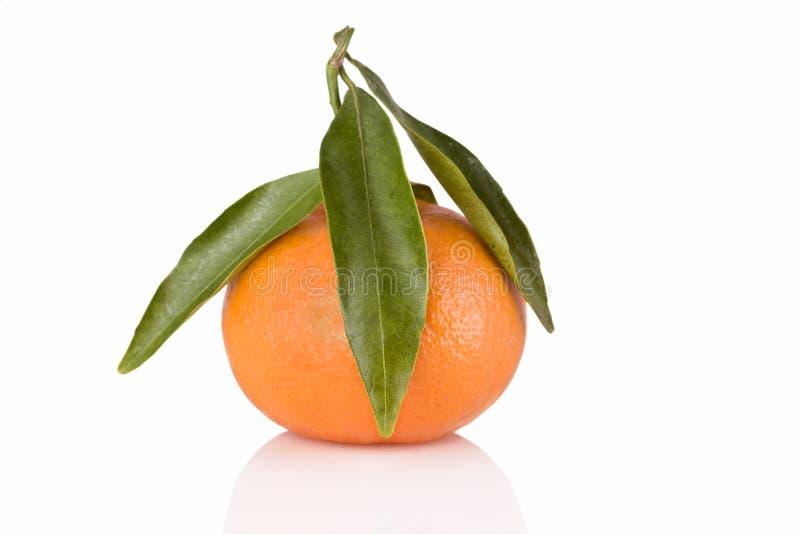 Mandarino fresco fotografia stock libera da diritti