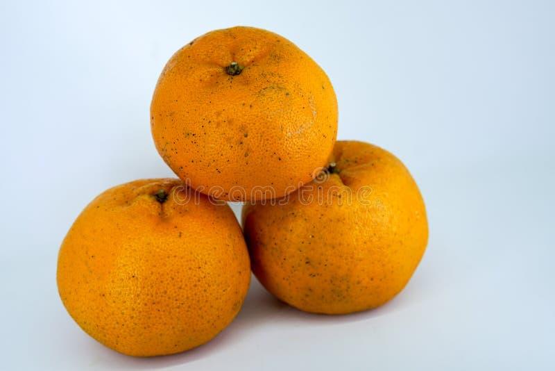 Mandarino fresco immagine stock libera da diritti