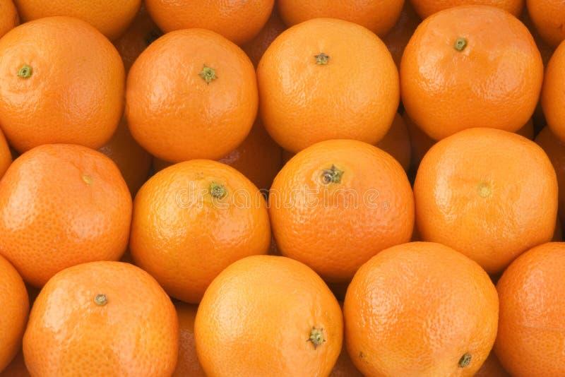 mandarins royaltyfri fotografi