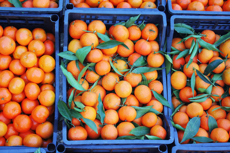 Download Mandarins In Boxes Royalty Free Stock Photo - Image: 22268755