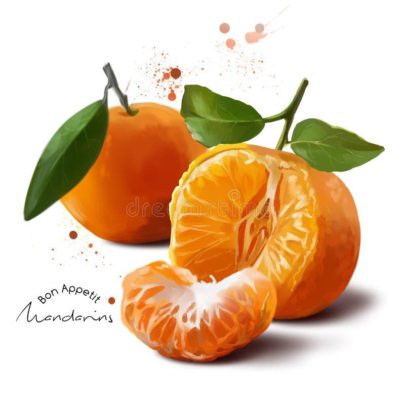 Mandarins en plonsen van waterverf het schilderen vector illustratie