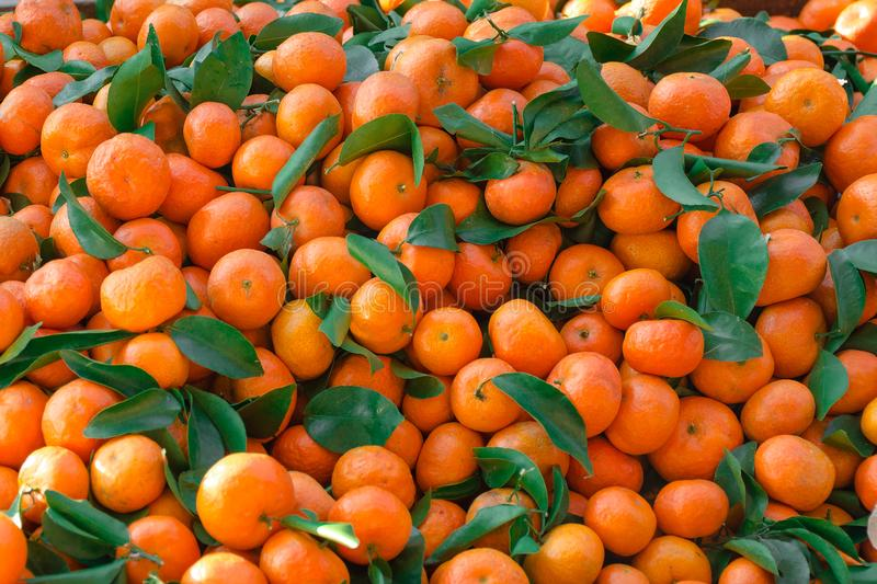 Mandarins with green leaves scattered dense layer. royalty free stock photography