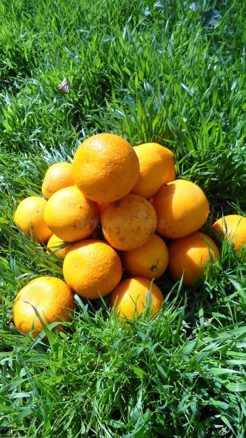 Mandarins in groen gras Voor een heldere zonnige dag, worden de foto's van mandarins gemaakt royalty-vrije stock afbeeldingen