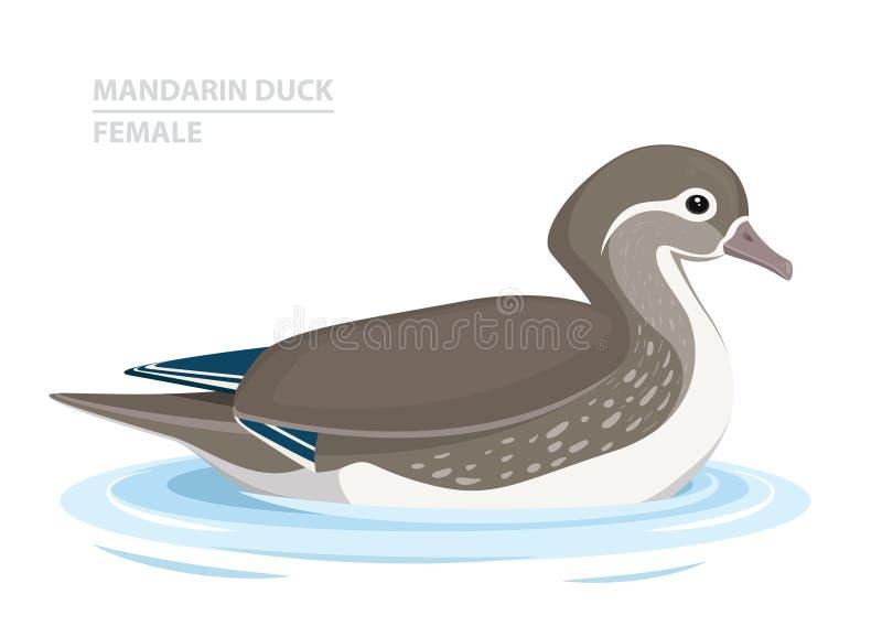 Mandaryn kaczki pływanie w wodzie femaleness azjatykci ptak wektor royalty ilustracja