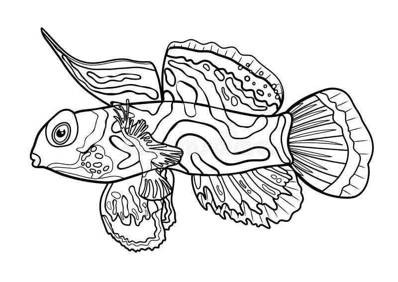 Mandaryn ryba, kreskowa ręka rysujący sylwetki kreskówki denny zwierzę, konturowy morski charakter, kolorystyka, nakreślenie Kont royalty ilustracja