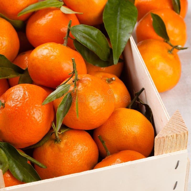 mandarynek pomarańcze zdjęcia royalty free