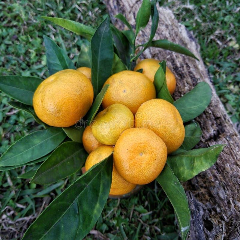 mandarynki zdjęcie stock