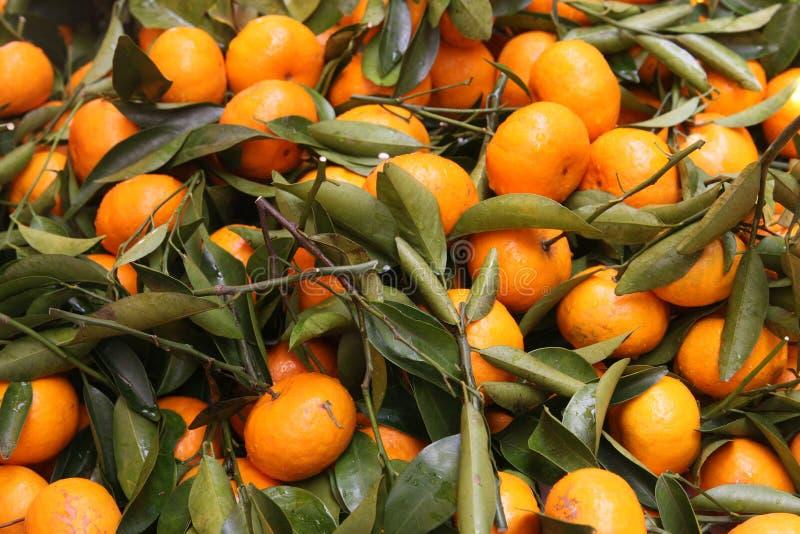 mandarynki pomarańcze fotografia royalty free