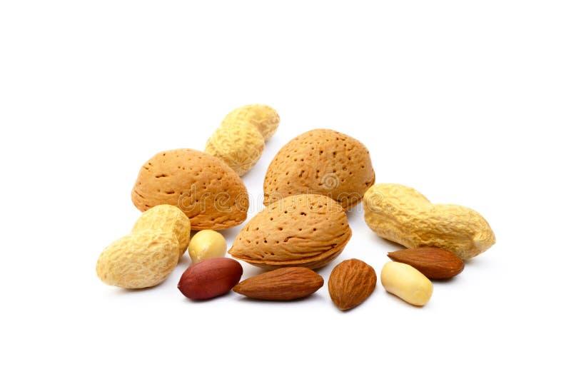 Mandeln, Haselnüsse, Walnüsse und Erdnüsse lizenzfreie stockbilder