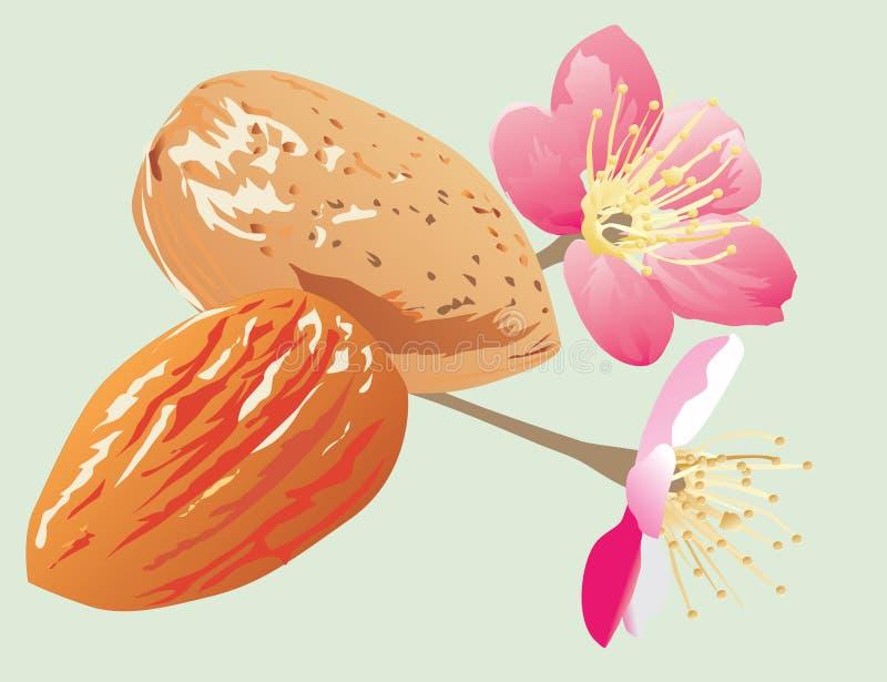Mandeln und Blumen lizenzfreie abbildung