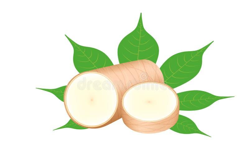 Mandioca fresca e folha isolada no fundo branco, fatia crua do corte da mandioca para a moagem das tapiocas ou a indústria do á ilustração royalty free