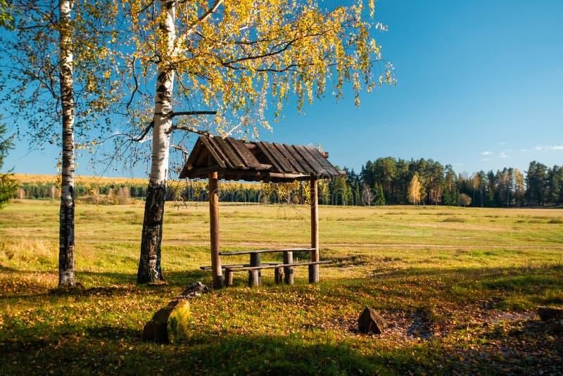 Mandril com os bancos perto do campo, sob um vidoeiro com folhas amarelas e sob o céu azul fotografia de stock royalty free