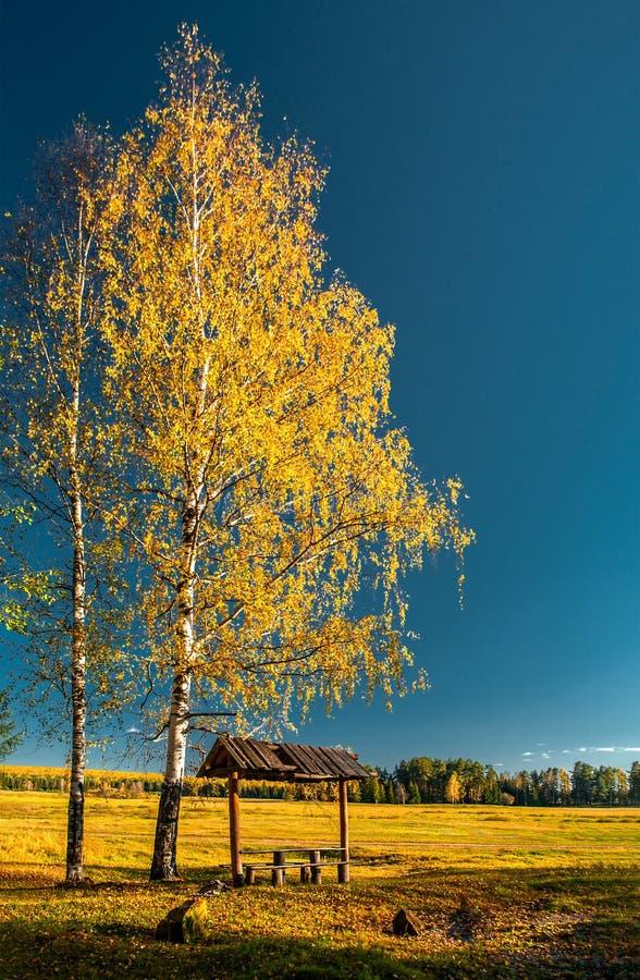 Mandril com os bancos perto do campo, sob um vidoeiro com folhas amarelas e sob o c?u azul fotos de stock