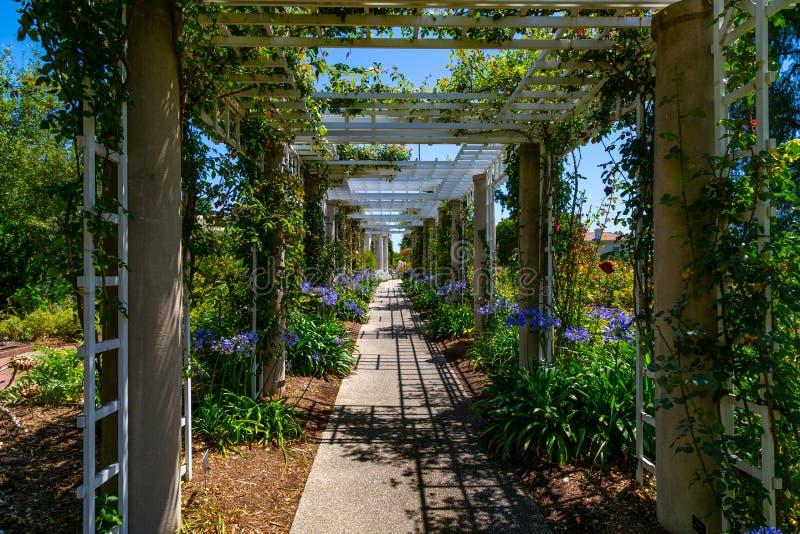Mandril do jardim imagens de stock royalty free