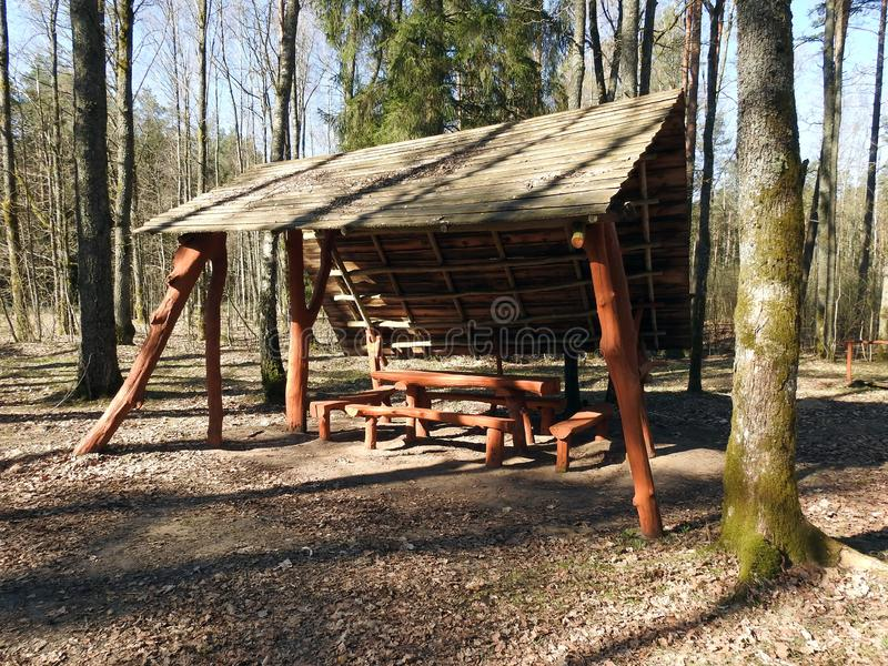 Mandril do verão para o resto na floresta, Lituânia fotos de stock