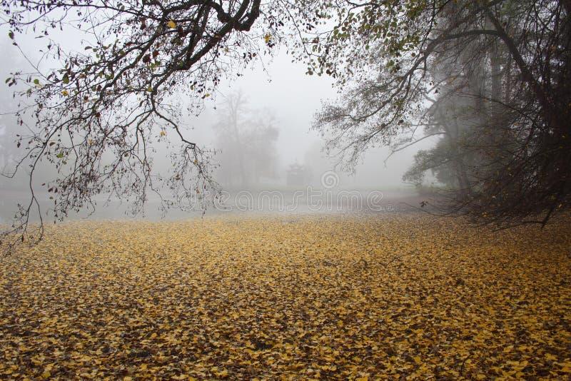 Mandril oriental pequeno em uma manhã nevoenta no outono foto de stock royalty free
