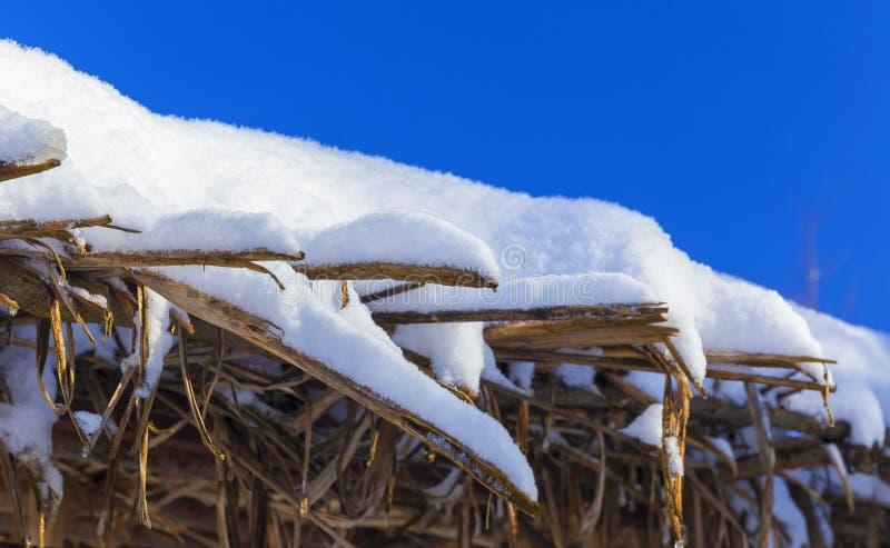 Mandris cobertos de neve na floresta do inverno fotografia de stock