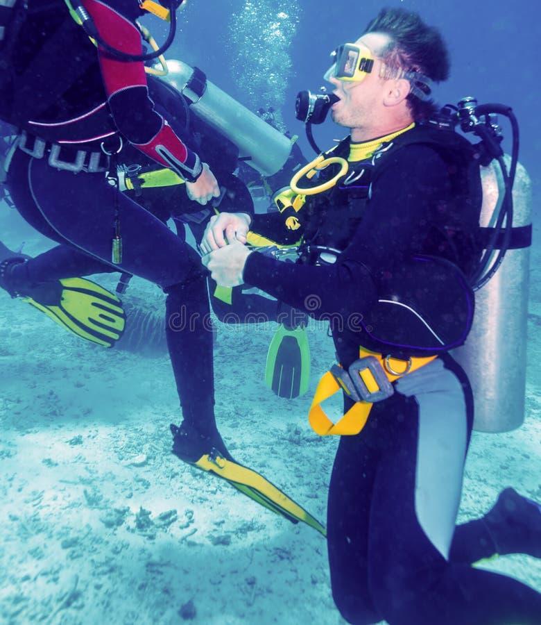 Mandykare Kneeing på sandbotten fotografering för bildbyråer