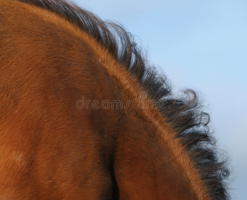 Download Mane stock photo. Image of horse, chestnut, animal, sorrel - 7083690
