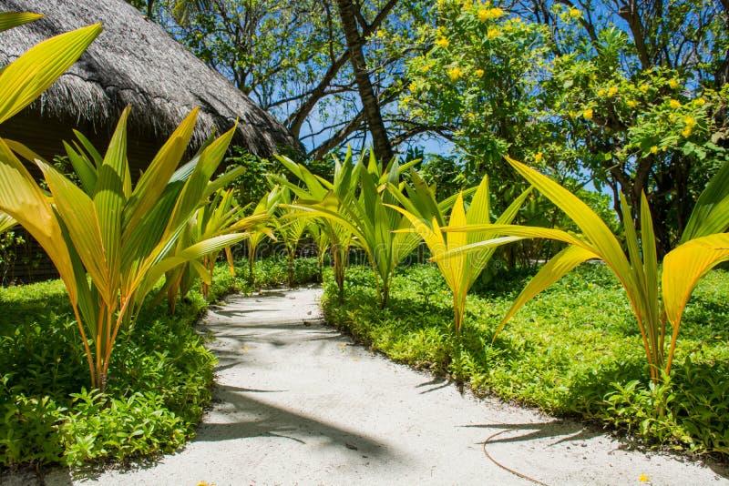 Maneira à praia em Maldivas imagens de stock