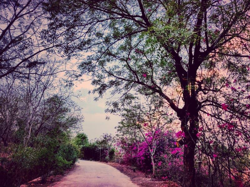 Maneira ao céu com viagem por estrada natural da cor fotografia de stock