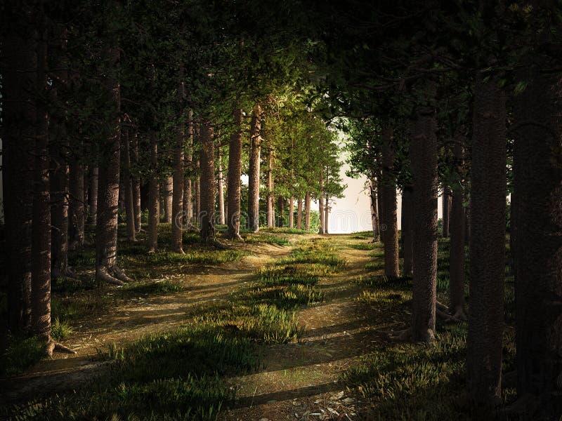 Maneira através da floresta do pinho ilustração stock