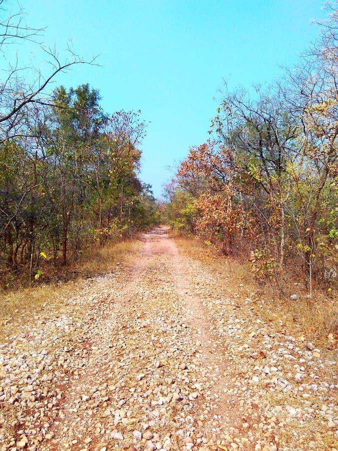 Maneira através da selva, satpura india fotos de stock
