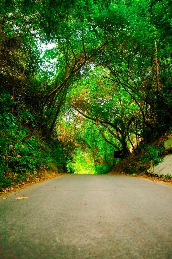 Maneira bonita da estrada ou do trajeto na aleia com ?rvores verdes e na grama em exterior ensolarado do ver?o sem carro imagem de stock