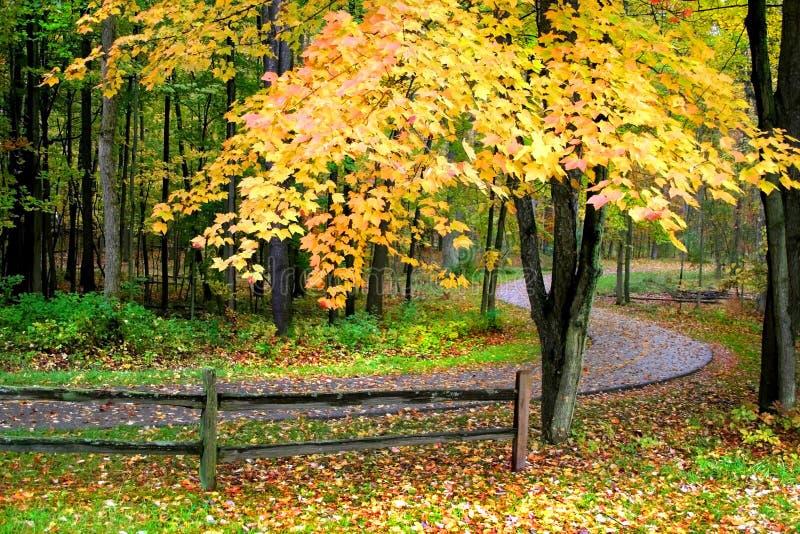 Maneira cénico da caminhada do outono fotografia de stock royalty free