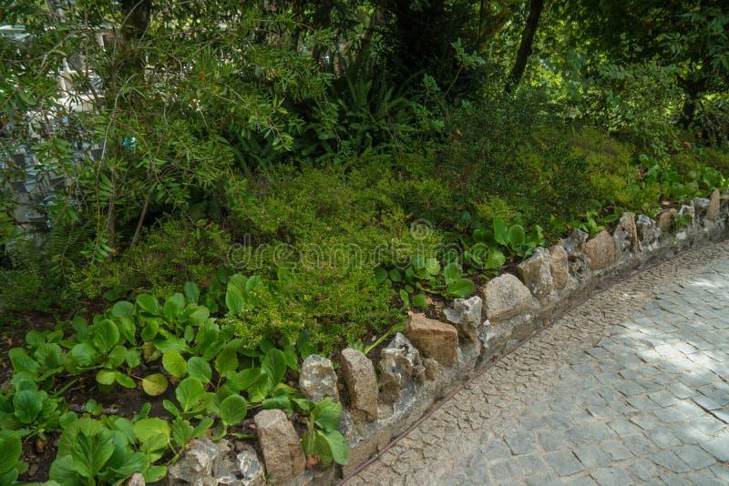 Maneira com beira de pedra natural no jardim botânico imagem de stock