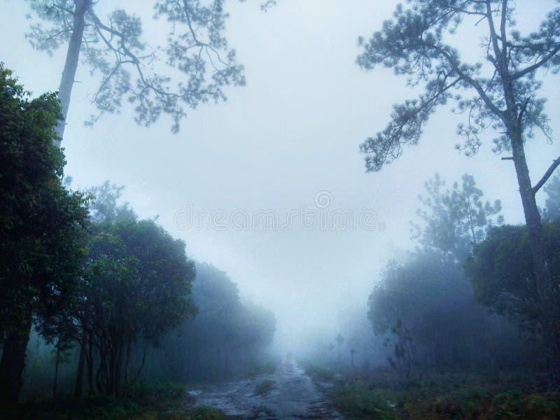 Maneira da névoa imagens de stock royalty free