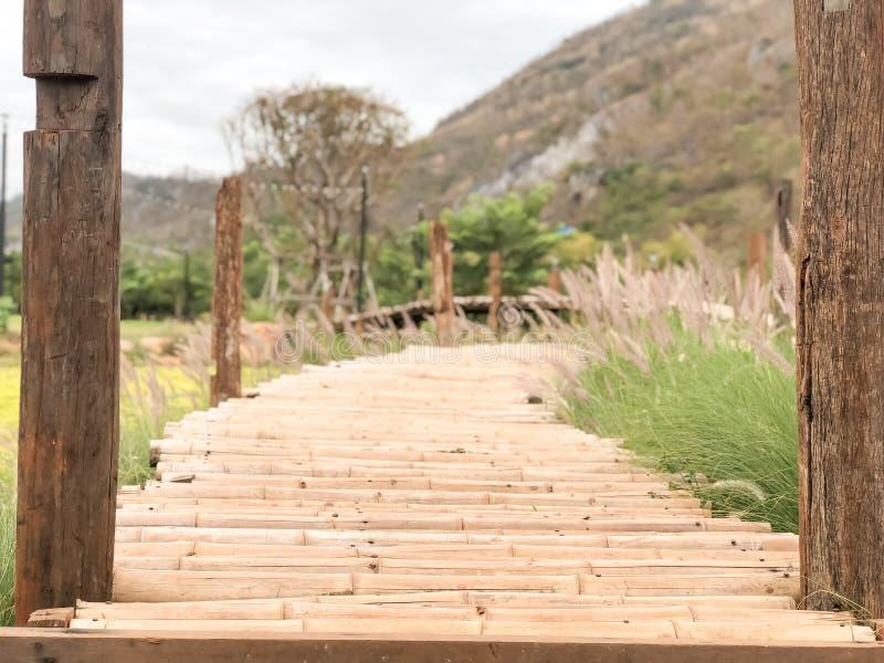 Maneira da ponte de madeira ao jardim no recurso imagem de stock royalty free